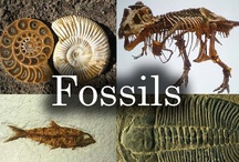 Fossils  / by Diana Taylor