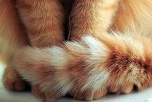 Tiny domenstic tigers / Because orange cats are the cutest of all.