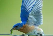 Birds / My favorite wildlife!