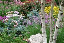 Garden Inspiration / by Dodie Costello
