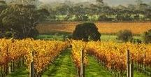 Wines of South Australia / South Australia is the nation's premier wine state. Here you will find pins and info about some of the most innovative winemakers, beautiful wines and most exciting wines for alternative varieties. If you would like to join this board please contact Darby Higgs