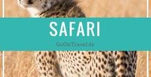 Safari / Safari Tips, Safari Planung, Safari Anbieter