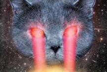 Catsanity