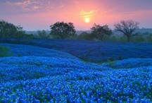 The Lone Star State / by Terri Duhon