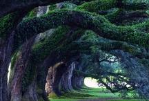 trees / by Julie Ballard