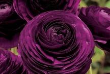 Flowers / by Natasha Hensel