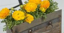 Ideen für Balkon & Garten / garden & balcony inspiration / Balkon und Garten sind herrliche grüne Oasen in Deinem Zuhause. Wir pinnen für Dich alles, was Du zum Gärtnern brauchst: Blumentöpfe, Pflanzstecker, Gartenhäuser und ganz viel Inspiration für grüne Daumen.