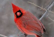 REDS, crimson, rojo, etc... / by Victoria M.