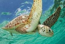Marine Conservation / The best of our Marine Conservation Volunteer and Intern Abroad programs. Locations include Fiji, the Seychelles, Kenya, Mexico and Thailand