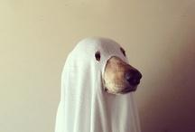 Canine / by Leisa Cearr