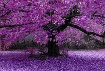 Purple / by Leisa Cearr