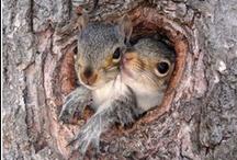 Squirrel Moments / by Cristina Vazquez-Villegas