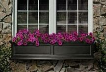 Window Box Wonderful / Improve your view! We think Wave Petunias and Cool Wave Pansies make great choices for window boxes. Here's some more of our favorite Pinspiriations.