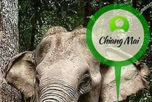 Chiang Mai / Trek up into Chiang Mai's forest and help rehabilitate elephants rescued from tourist camps.