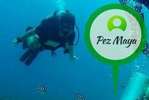 Pez Maya / Dive into the crystal clear waters of the Caribbean and volunteer on a variety of marine conservation projects. Plus, get your PADI Advanced or Dive Master while you are at it!