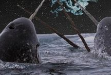 narwhal's and unicorns
