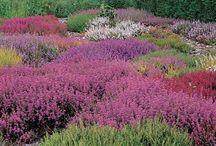 For the Garden / Gorgeous gardens