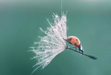 Beautiful Animals  / by Pam Olsen Huppert