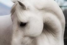 For the Love of Horses / by Pam Olsen Huppert