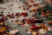 autumn / by KT