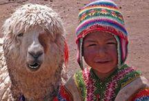 Peru / Ja, natuurlijk wil je naar de Machu Picchu. Toch? Dat kan, in de voetsporen van de oorspronkelijke bewoners: de Inca's. Het verborgen ponchopad brengt je niet alleen naar de ruïne, maar neemt je ook mee van het gebaande pad naar een lokale markt. Probeer eens een schaap of lama te scheren of leer weven. Bouw je eigen Peru- en Bolivia-reis op www.peruonline.nl.