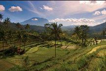 Bali / Indonesië is als een langgerekte, uitbundig gedekte tafel, waar alle eilanden gezellig bij aangeschoven zijn. Elk eiland heeft een eigen karakter, maar gezamenlijk vormen de ruim 17.000 eilanden één grote familie. En net als bij een gezellige familiemaaltijd, is eten hier een bindende factor. Slaap in Bali in een waterpaleis of leer koken bij een familie thuis. Bouw jouw individuele Bali-reis op www.indonesieonline.nl.