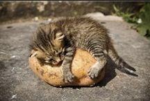 cat puns freak meowt. / by paper cuts
