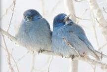 bluebirds / I love bluebirds