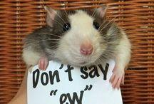 Ratties & Cool Animal Habitats! / Rat Lovers board / by Jenni Smolek