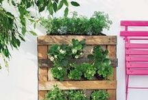 Thrifty Garden / Growing vegetables and other garden goodies on a thrifty budget! / by A Thrifty Mrs