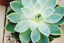 Green Thumb Garden