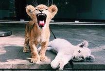 ANIMALS / beautiful and cute animals.