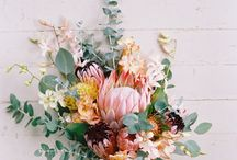 Flowers / Beautiful Flowers and photography ideas. Drawing inspirations. Wildflowers, tropical flowers, and classic bouquets.