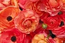 april flowers | lynnvale studios / by Andrea Gagnon
