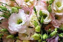 july flowers | lynnvale studios / by Andrea Gagnon