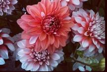 september flowers | lynnvale studios / by Andrea Gagnon