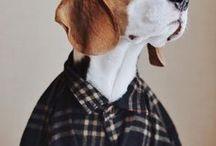 Beagle Chet-Pinochet