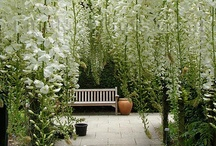 Garden Wishes / by Hannah Gustafson