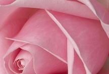 Pink...it's a MUST!!!! / by Joann McCabe