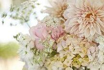 Flowers / by Nathalie Herrera