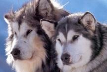 Dog breeds