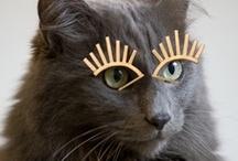 Cat(s) Lady