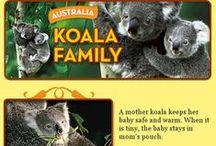 Koalas / My favorite animal. Marsupials not bears... / by Jenna Cooley