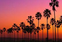 C A L I F O R N I C A T I O N / Dreaming of LA