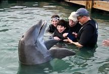Great family trips / Truly awesome trips for everyone in the family / by Love That Max: Special Needs Resources