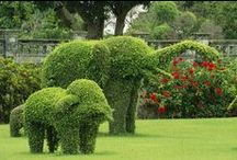 Top Topiaries! / What can I say? I love topiaries!