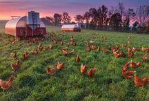 DREAM FARM / by Patricia Rothman Brown