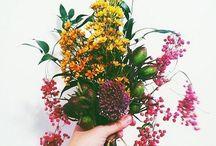 //garden / love - grows - here