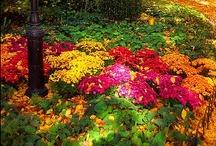 Garden / by Diane Dietrich Shull