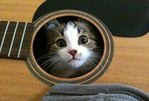 .:Meow [..leave my kitten alone...]:.